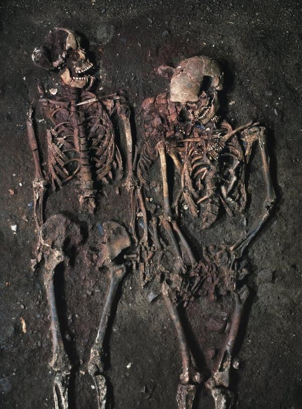 Skeletter Boegebakken  Natmus  lav oploest