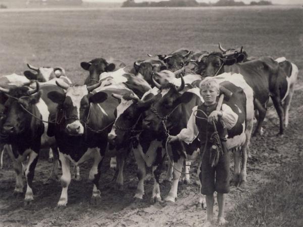 demokratisering boernearbejde