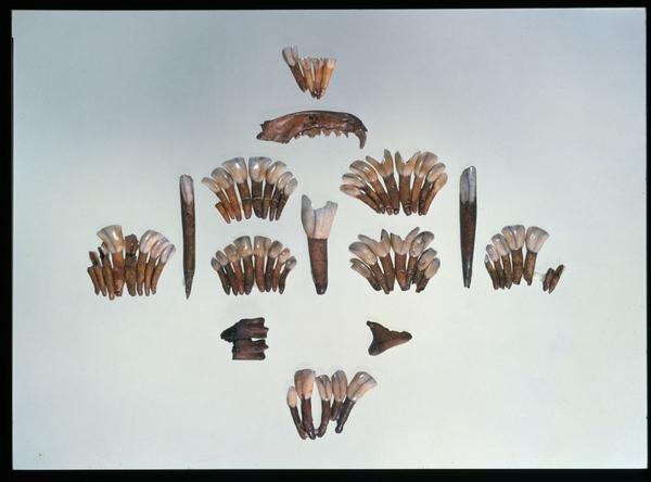 Tandperler fra Boegebakken DO 2249 1200  nat mus